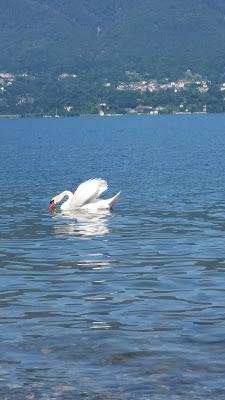 Pesca solitaria sul lago di Marinazu