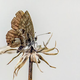 Butterfly by Adele Price - Animals Insects & Spiders (  )