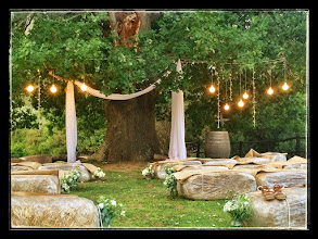 Photo: Wedding spot under the oak