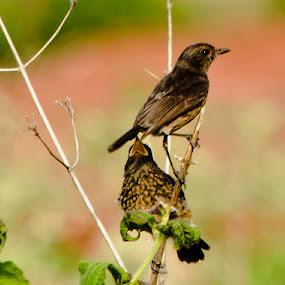 Togetherness by Manjunath Nagesha Rao - Animals Birds