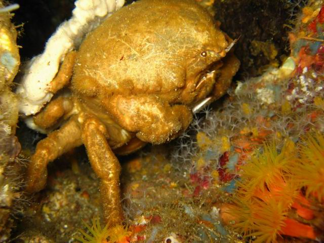 Photo: Crabe