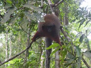 Photo: Titi Monkey