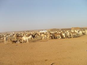 Photo: mercato bestiame