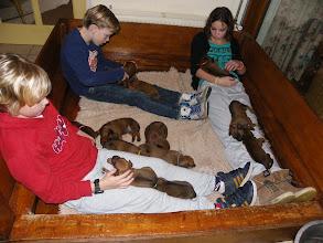 Photo: de kleinkinderen vinden het altijd weer leuk om de pups te vertroetelen