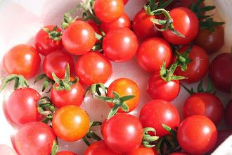 Photo: 岡田農園のマイクロトマト ミニトマトよりも小さかったです。