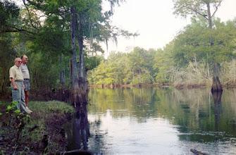 Photo: 2A081050 FL - Withlacoochee River Park – Piękne bagna z cyprysami