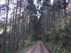 林道歩きで下山