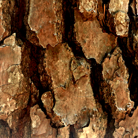 brown bark by Edward Gold - Nature Up Close Trees & Bushes ( bark, tree, backshadow, brown,  )