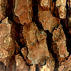 brown bark by Edward Gold - Nature Up Close Trees & Bushes ( bark, tree, backshadow, brown,  )