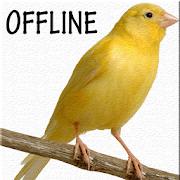 Masteran Suara Burung Kenari