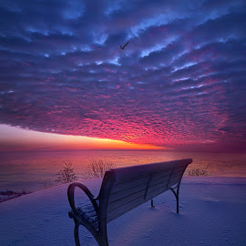 by Phil Koch - Landscapes Sunsets & Sunrises ( vertical, bench, arts, travel, love, sky, nature, shadow, snow, weather, light, trending, colors, art, twilight, mood, white, journey, horizon, rural, portrait, country, dawn, winter, environment, season, serene, outdoors, popular, lines, natural, inspirational, hope, canon, wisconsin, joy, frozen, landscape, sun, photography, life, emotions, dramatic, horizons, inspired, clouds, office, heaven, beautiful, scenic, morning, living, shadows, field, bird, fineart,  )