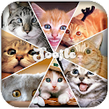Cat Funny Pictures icon