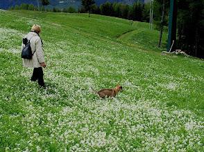 Photo: Blumenteppich oberhalb Verdins