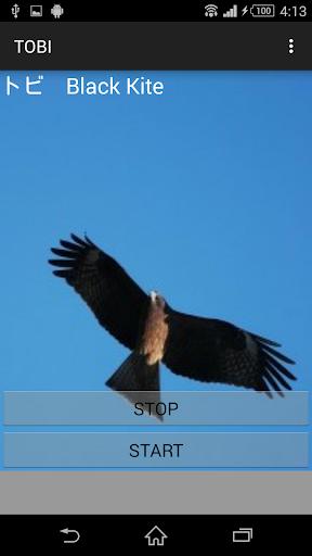 鳥鳴き声トビ