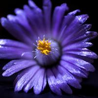 FLOWER di