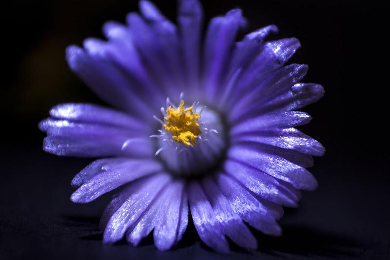 FLOWER di Mony.M