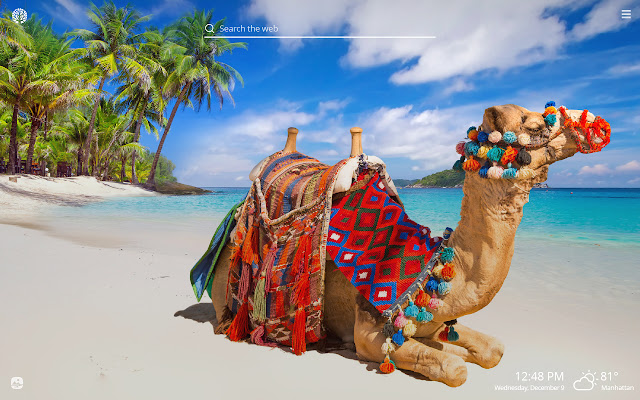 Camel HD Wallpapers New Tab Theme