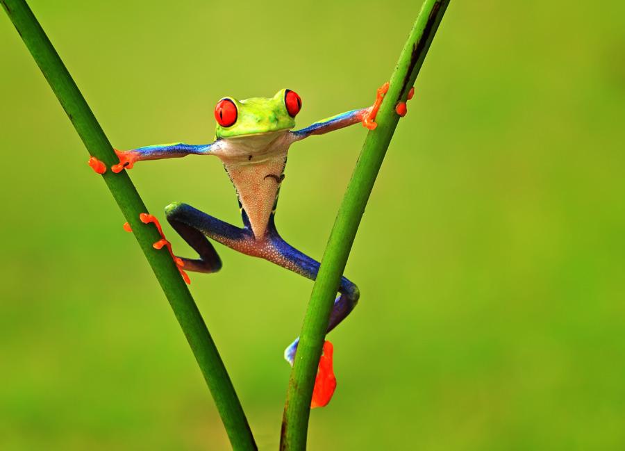 i am spiderman by Shikhei Goh II - Animals Amphibians