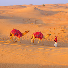 Dubai Desert Days by Peyton Blair - Novices Only Landscapes