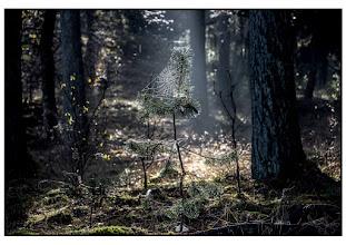 Photo: Natuur Bossen met spinneweb. foto. Bert Morsink.