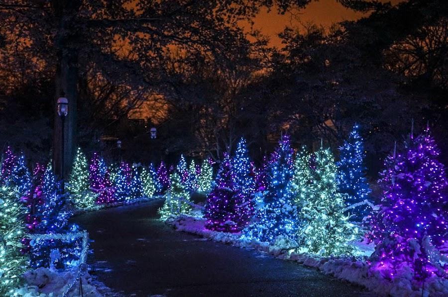 by Teresa Hoyt - Public Holidays Christmas (  )