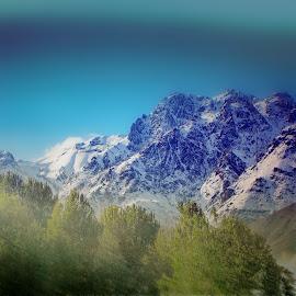 shemiran by Fereshteh Molavi - Landscapes Mountains & Hills ( trees )