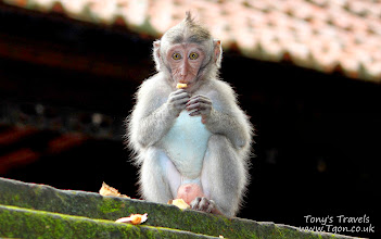 Photo: Baby Monkey in the Monkey Forest, Bali, Indonesia