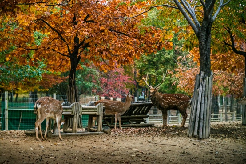 seoul forest2