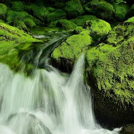 Lepote Gljuna by Bojan Kolman - Nature Up Close Water