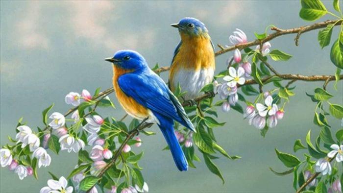 Những con số may mắn khi nằm mơ thấy chim chóc
