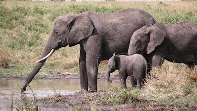 Photo: In the Serengeti National Park