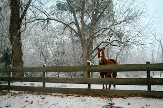 Photo: Pretty Horse!