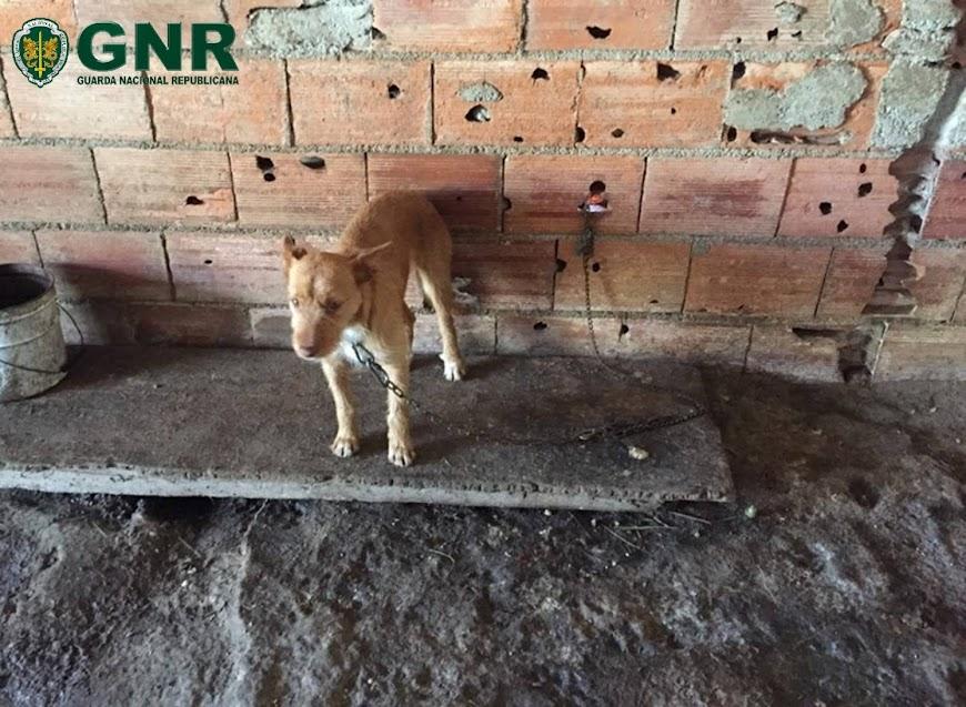 GNR Viseu | Lamego – Identificado por maus tratos a animais