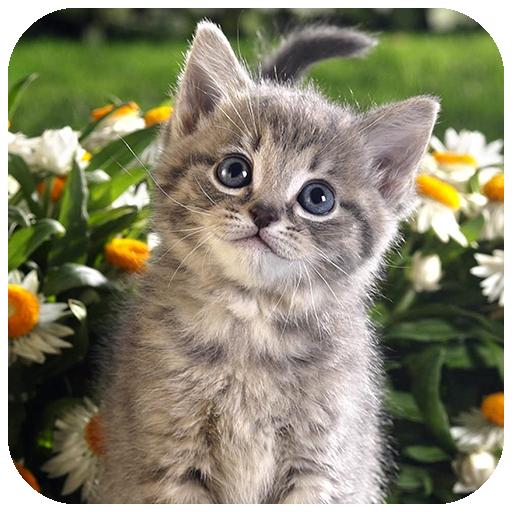 App Insights: Kitten wallpapers 4K