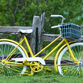 Yellow bicycle in the countryside by Rebecca Roy - Transportation Bicycles ( countryside, fence, yellow, vintage bicycle, bicycle,  )