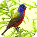 HD Nature Live Wallpapers icon