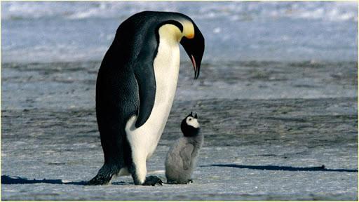 HDペンギンの壁紙