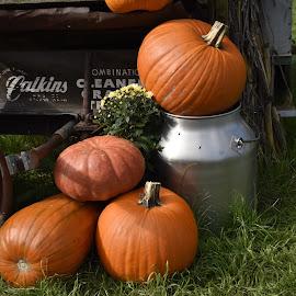 by Terry Oviatt - Public Holidays Halloween