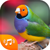 Download Bird Sounds & Bird Ringtones for Free 2018 Free
