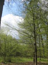 Photo: Dookoła było słonecznie i zielono. Wiosna delikatnie dawała się we znaki.