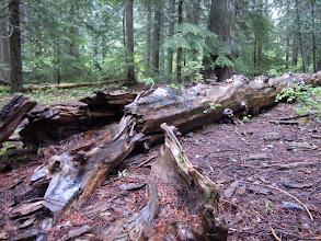 Photo: Pretty dead tree