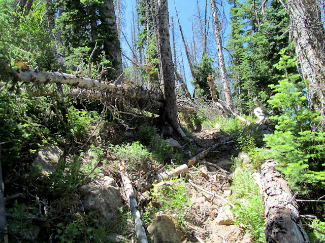 Deadfall covering the trail