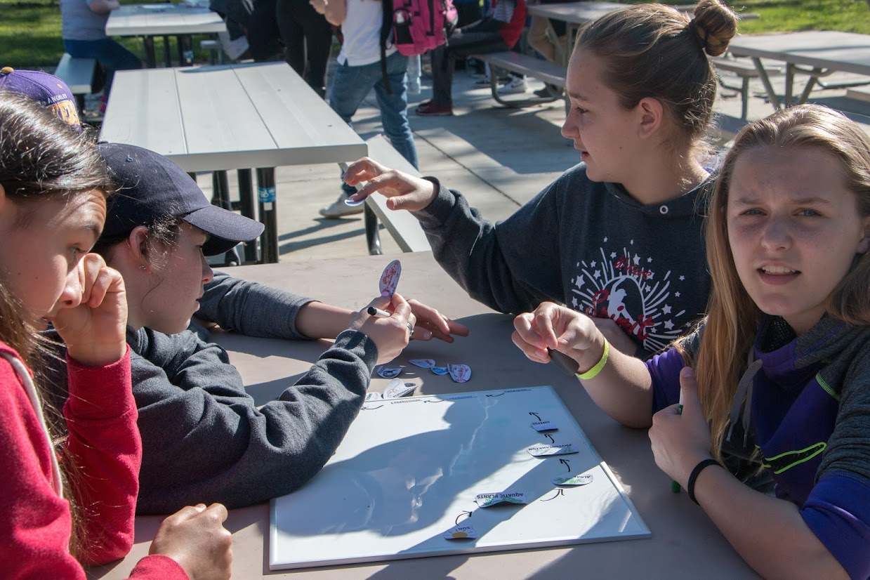 A group of girls piece together a food web to explore interactions between different aquatic organisms.