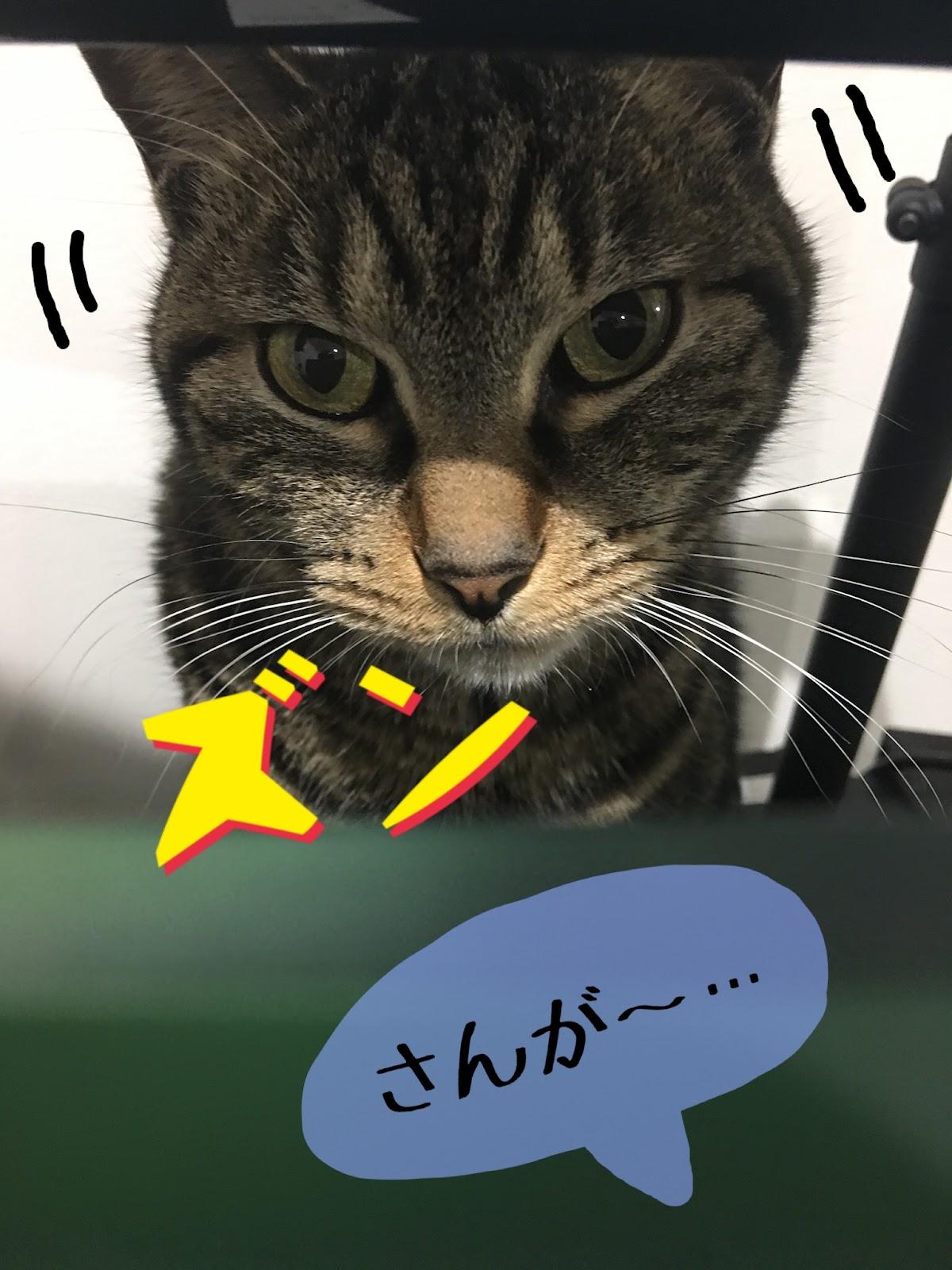 猫も芸を覚える?喋って話す猫も?猫に芸を覚えさせる方法