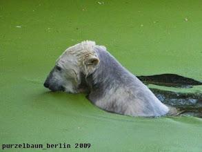 Photo: Schwimmen im Gruenen ;-)