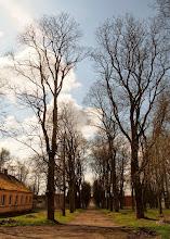 Photo: Nuo Stasinės iki Lančiūnavos driekiasi liepų alėja.