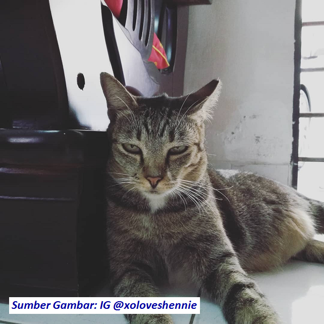 muka-annoying-face-cat
