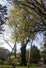 Photo: F4230456 w Ogrodzie Botanicznym