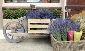 Oignons au marché près de la maison d'hôtes en Provence