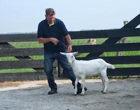 Photo: Rubriek 1: witte lammeren geboren in maart en april 2014.  1f. Joke 42.